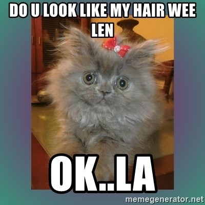 cute cat - do u look like my hair wee len ok..la