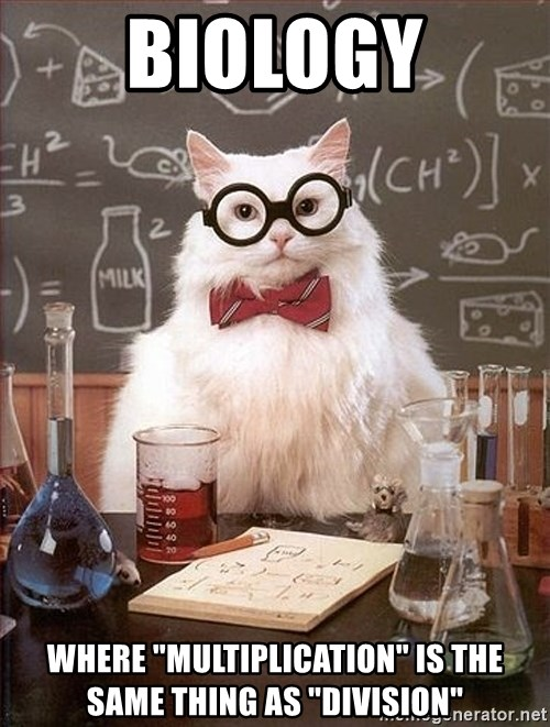 """Science Cat - biology where """"multiplication"""" is the same thing as """"division"""""""