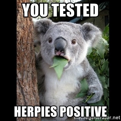 Koala can't believe it - YOU TESTED  HERPIES POSITIVE
