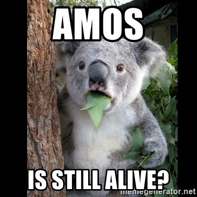 Koala can't believe it - Amos is still alive?
