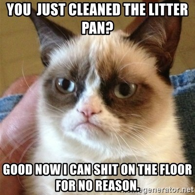 Grumpy Cat  - You  just cleaned the litter pan? Good now i can shit on the floor for no reason.