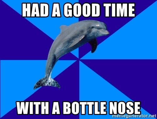 Drama Dolphin - had a good time with a bottle nose