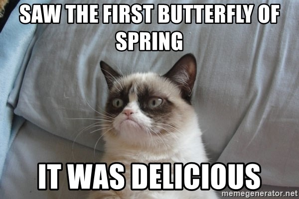 Grumpy cat good - Saw the first butterfly of spring It was delicious