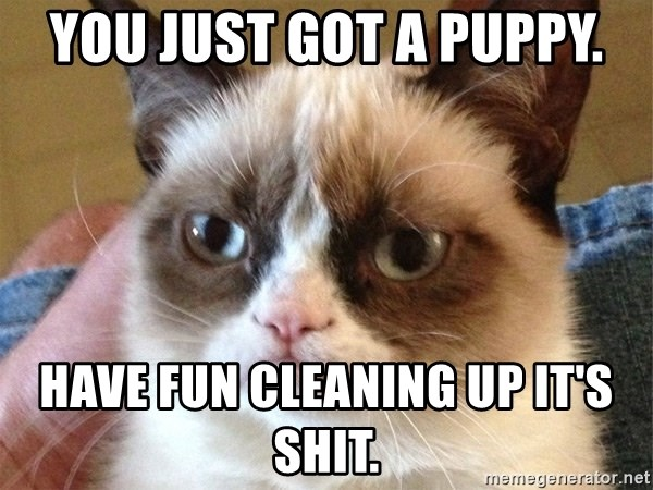 Angry Cat Meme - You just Got a pUppy. HavE fun cleaning up It's ShiT.