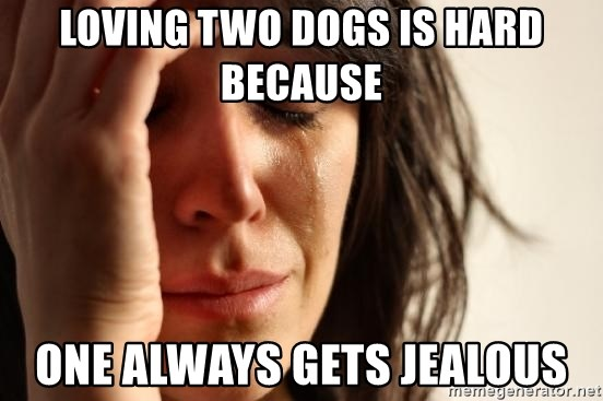 First World Problems - Loving two dogs is hard because one always gets jealous