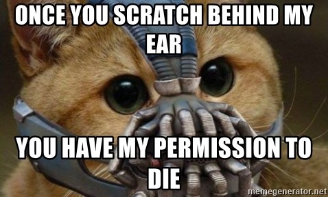 bane cat - Once you scratch BeHind my ear You have my permission to die
