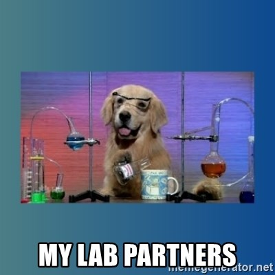 Chemistry Dog -  my lab partners