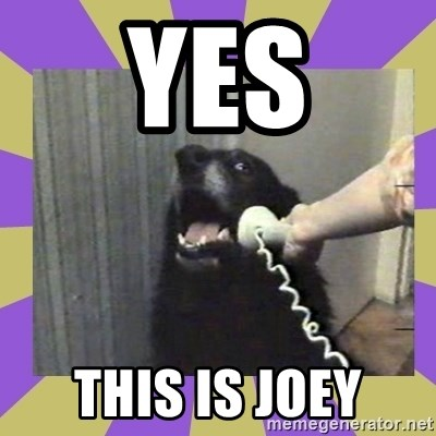 Yes, this is dog! - Yes This is joey