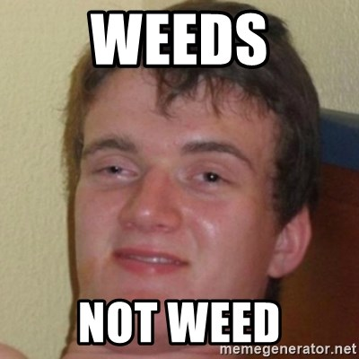10guy - weeds not weed