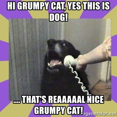 Yes, this is dog! - hi grumpy cat, yes this is dog! .... that's reaaaaal nice grumpy cat!
