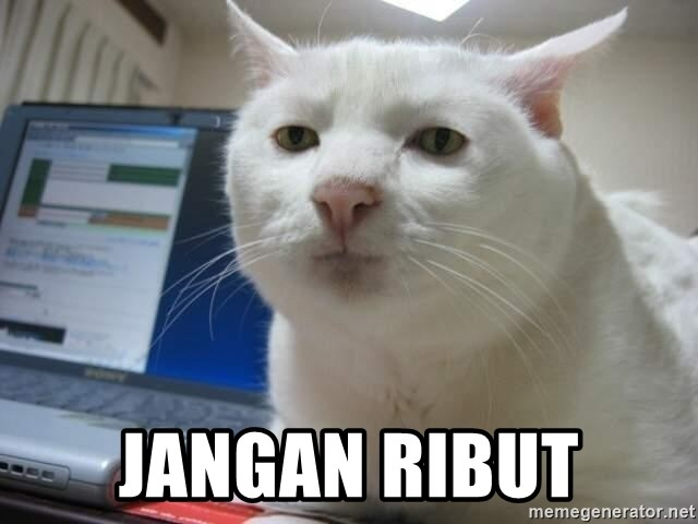 Serious Cat -  JANGAN RIBUT