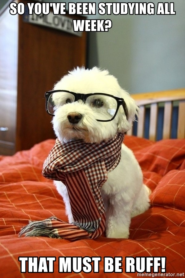 hipster dog - So you've been studying all week? That must be Ruff!