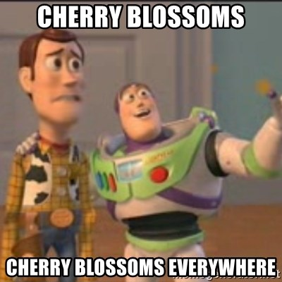 Buzz - cherry blossoms cherry blossoms everywhere