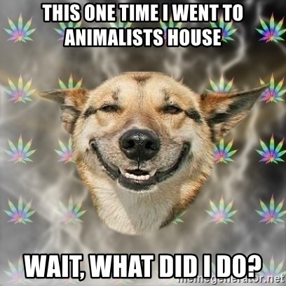 Stoner Dog - this one time i went to animalists house wait, what did i do?
