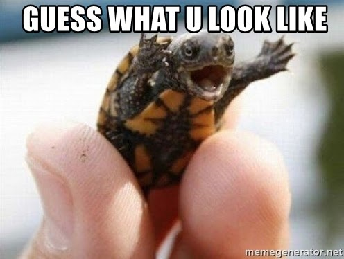 angry turtle -  Guess what u look like