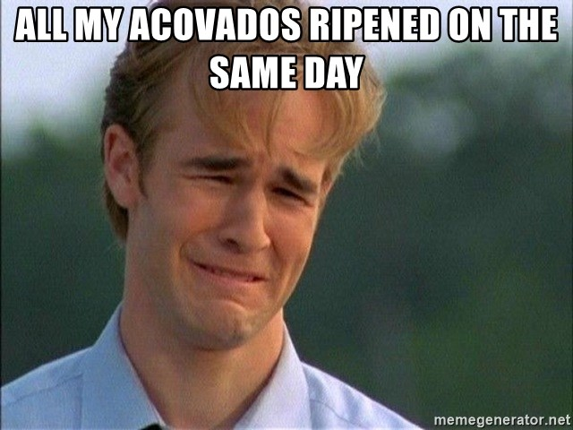 Dawson Crying - All my Acovados ripened on the same day