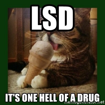 lil bub - lsd it's one hell of a drug