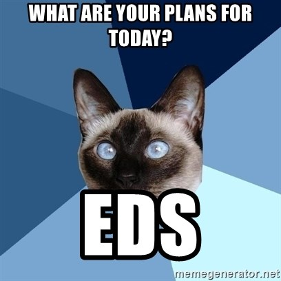 Chronic Illness Cat - what are your plans for today? eds