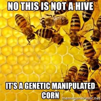 Honeybees - No this is not a hive it's a genetic manipulated corn