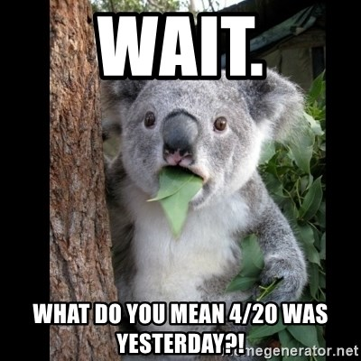 Koala can't believe it - wait. what do you mean 4/20 was yesterday?!
