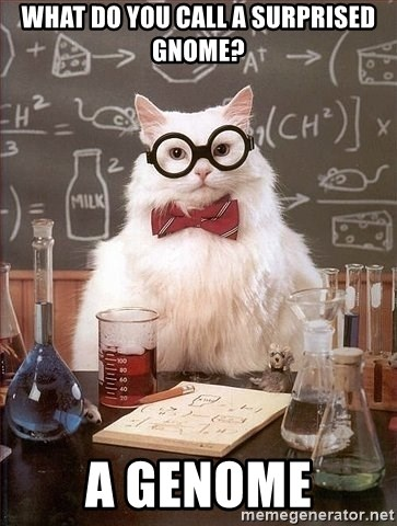 Chemist cat - what do you call a surprised gnome? a genome