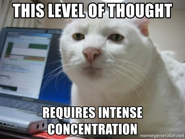 Serious Cat - this level of thought requires intense concentration