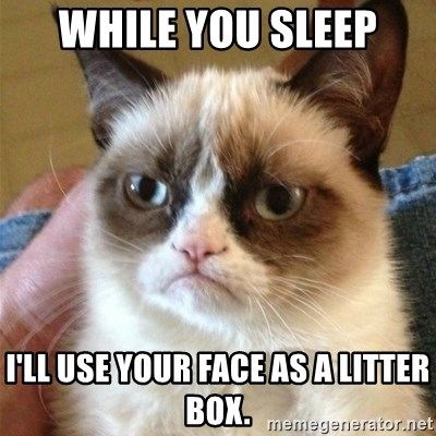 Grumpy Cat  - while you sleep I'll use your face as a litter box.