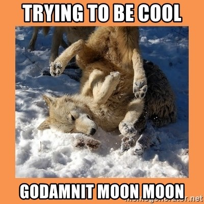 Moon Moon - Trying to be cool GoDamnit moon moon