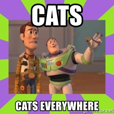 X, X Everywhere  - Cats Cats everywhere