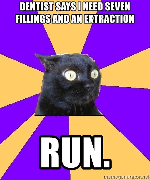 Anxiety Cat - Dentist says i need seven fillings and an extraction  run.