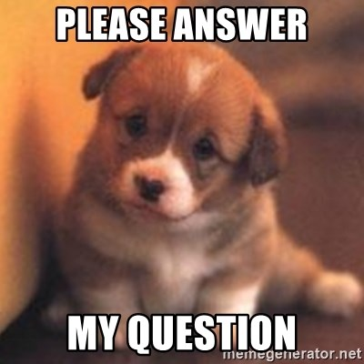 cute puppy - PLEASE ANSWER MY QUESTION