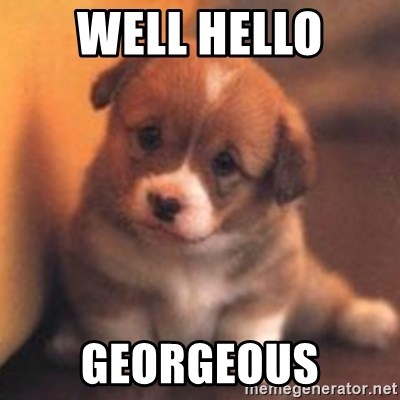 cute puppy - Well hello Georgeous