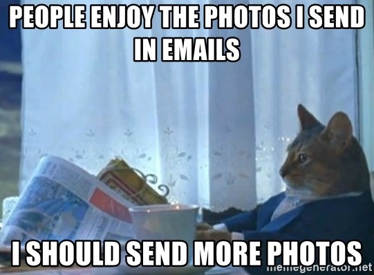 Sophisticated Cat - people enjoy the photos i send in emails i should send more photos