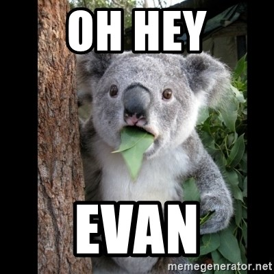Koala can't believe it - Oh hey Evan