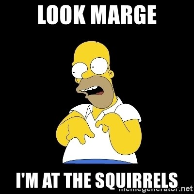 look-marge - Look marGe I'm at thE squirrels