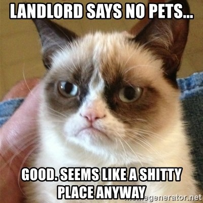 Grumpy Cat  - landlord says no pets... Good. Seems like a shitty place anyway