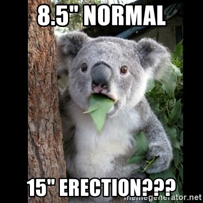 "Koala can't believe it - 8.5"" normal 15"" erection???"