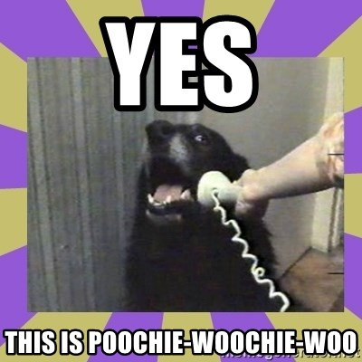 Yes, this is dog! - yes this is poochie-woochie-woo