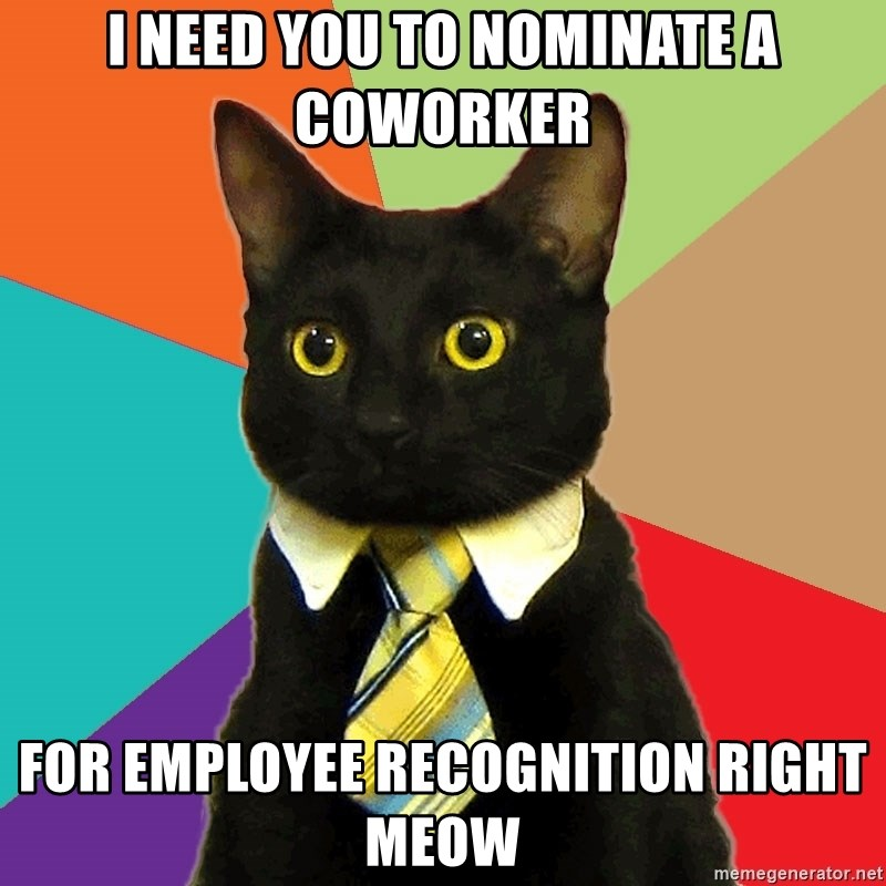 Business Cat - i need you to nominate a coworker for employee recognition right meow