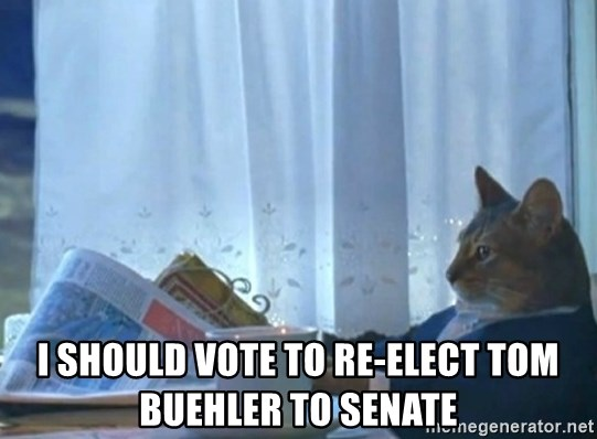 Sophisticated Cat -  I should vote to re-elect tom buehler to senate