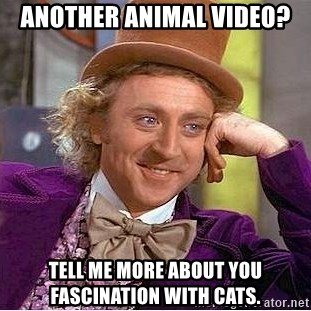 Willy Wonka - Another animal video? Tell me more about you fascination with Cats.