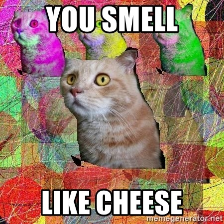 A Cat - YOU SMELL LIKE cheese