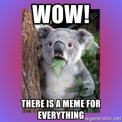 Koala Surprise - WOW! There is a meme for everything