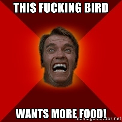 Angry Arnold - this fucking bird wants more food!