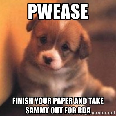 cute puppy - Pwease Finish your paper and take Sammy out for RDA