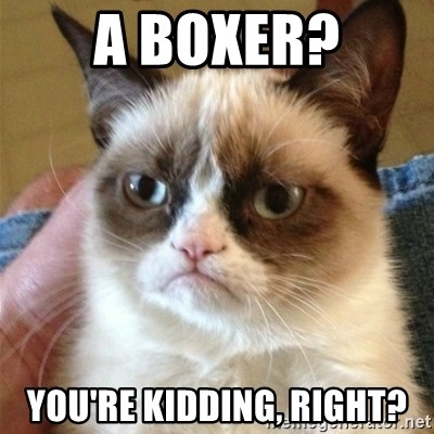 Grumpy Cat  - a boxer? you're kidding, right?
