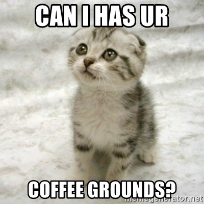 Can haz cat - Can i has ur coffee grounds?