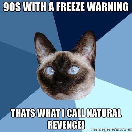 Chronic Illness Cat - 90s with a freeze warning Thats what I call Natural revenge!