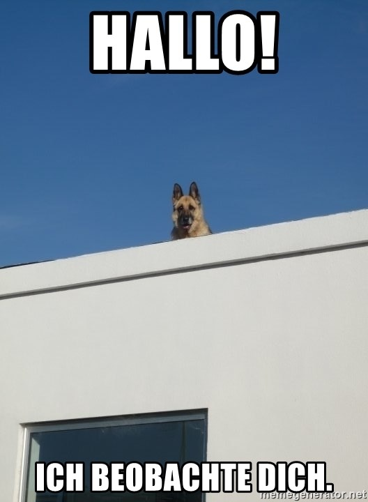 Roof Dog - hallo! ich beobachte dich.