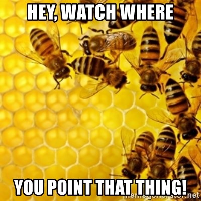Honeybees - hey, watch where you point that thing!